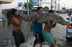 flood crocs
